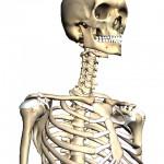Body browser の骨サンプル画像
